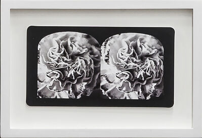 Penelope Stewart, 'Ruin Gazing Vol 1, paradise gardens - No: 029- Carnation swirl, framed stereoscopic cards created by artist', 2015
