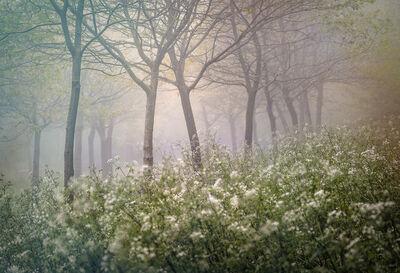 Valda Bailey, 'Bounteous Morn', 2012-2019