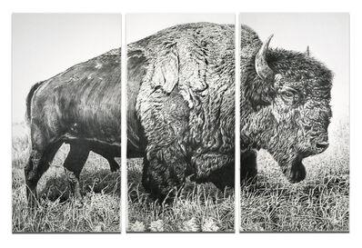 Rick Shaefer, 'American Bison', 2013
