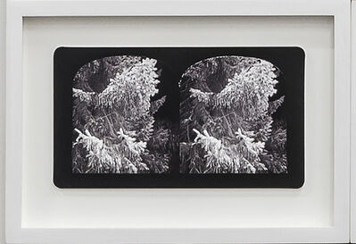 Penelope Stewart, 'Ruin Gazing Vol 1, paradise gardens - No: 025 - In the Garden at Dundee, Scotland, framed stereoscopic cards created by artist', 2015
