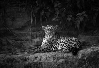 Araquém Alcântara, 'Jaguaretê Jaguar #3', 2018