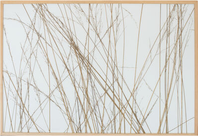 herman de vries, 'molinia caerentea, coll. traustädter wald 2001', 2001