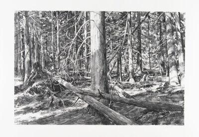 Michael Kareken, 'Lopez Island Woods', 2018