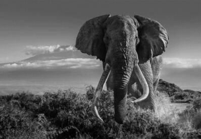 David Yarrow, 'Africa II', 2018