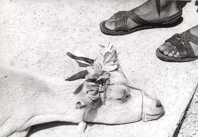 Graciela Iturbide, 'Cabritas. La Mixteca, México', 1992