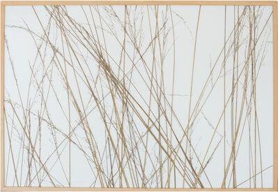 herman de vries, 'from series: parts – molinia caerentea, coll. traustädter wald', 2001