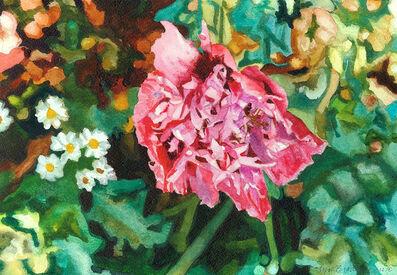 Carolyn Brady, 'Violet Pink Garden Poppy', 2004
