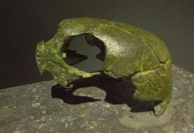Javier Ayarza Haro, 'El sueño de la tortuga (mockup)', 2019