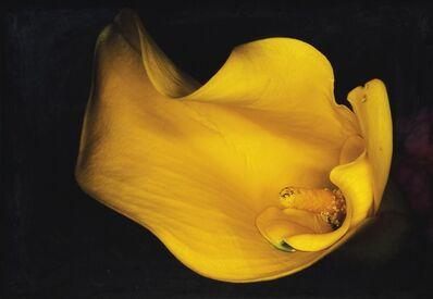 Nobuyoshi Araki, 'Kakyoku Series', 1997