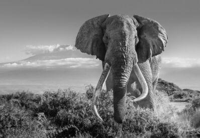 David Yarrow, 'Africa 2', 2018