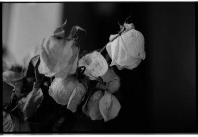 Mai Al Moataz, 'My Dead Roses', 2017