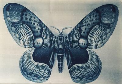 Thomas Hager, 'Wing Study - Moth - 2 1/12', 2015