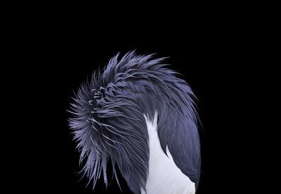 Brad Wilson, 'African Crowned Crane #4, Los Angeles, CA', 2011