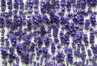 Alana Bartol, 'Enfleurage: Lavender', 2016