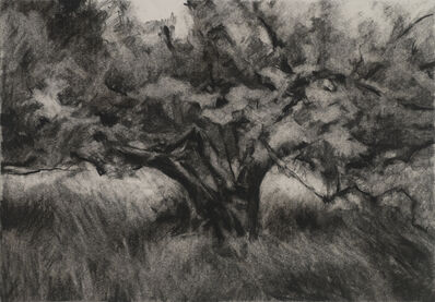 Connie Hayes, 'Orchard #6'