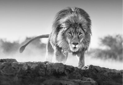 David Yarrow, 'Relentless', 2017