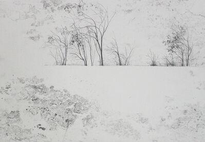 Marika Vicari, 'Alberi. Ombre sulla neve ', 2019