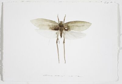 Guo Hongwei 郭鸿蔚, 'Painting is Collecting - Insect #7', 2012
