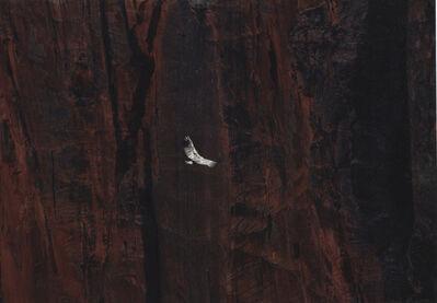 Daniel Gustav Cramer, 'Untitled (Condor)', 2012