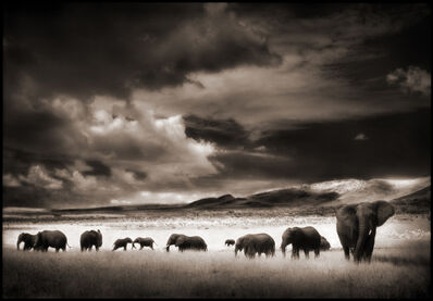 Nick Brandt, 'Elephant Herd', 2001