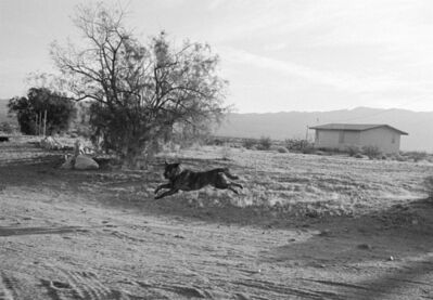 John Divola, 'Dogs Chasing My Car in the Desert D23F29', 1996/2001