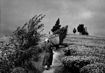 Sebastião Salgado, 'In the hills of Moko at the Gisovo tea plantation, Rwanda', 1991