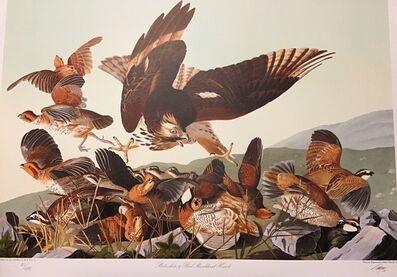 John James Audubon, 'Bobwhite & Red Shouldered Hawk -Publisher's Proof  (Plate 76) Signed, Numbered ', 1992