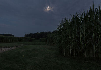 Jeanine Michna-Bales, 'Taking Cover with the Fireflies. North of Winchester, Indiana', 2014