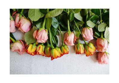 Karen Hirshan, 'Colorful Roses', 2020