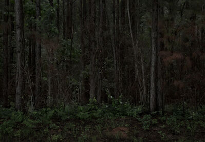 Jeanine Michna-Bales, 'Southern Pine Forest. Following El Camino Real, LaSalle Parish, Louisiana', 2014