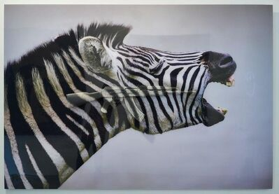 Carl Mccrow, 'Screaming Zebra', 2018