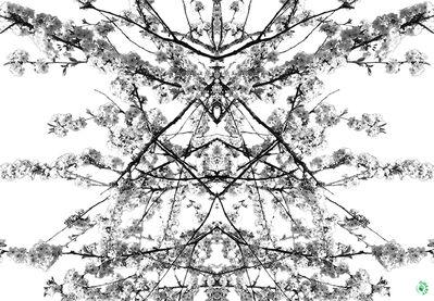 Jens Andersen, 'Rorschach', 2016
