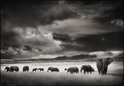 Nick Brandt, 'Elephant Herd, Serengeti, 2001', 2001