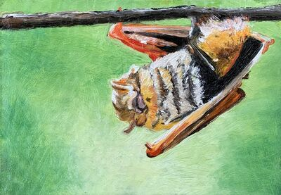 Ken Craft, 'Movement 2 Galapagos Red Bat', 2020