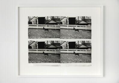 Andy Warhol, 'Donkey in Paddock', ca. 1977