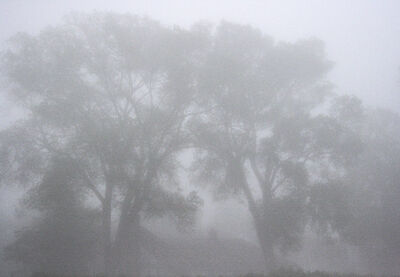 Francie Lyshak, 'Two Trees In Fog', 2013