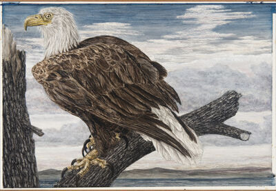 Janet Elizabeth Turner, 'Eagle', late 1970s-early 1980s