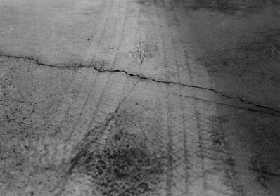 Mark Steinmetz, 'Knoxville, TN (weed in crack)', 1992