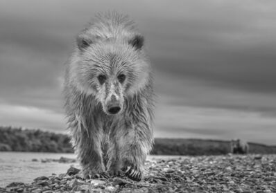 David Yarrow, 'Ted ', 2018