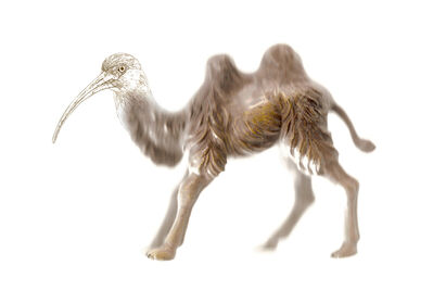 Miguel Ángel Fúnez, 'Gene targenting_Camel', 2014