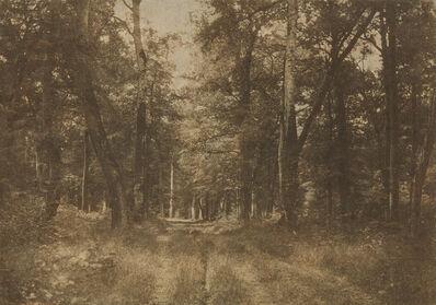 Gustave Le Gray, 'Sous-bois au Bas-Bréau, Forêt de Fontainebleau', 1852