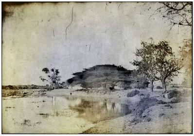 Thomas Ruff, 'tripe_20 Trimium. Umbrella tree, on bank of a tank.', 2018