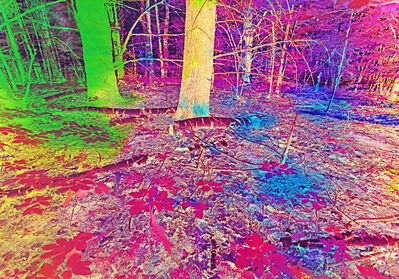 Mitchell Funk, 'Psychedelic Forest. Multiple Exposure with Colored Jels ', 1972