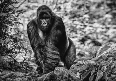 David Yarrow, 'The Pilgrim', 2020