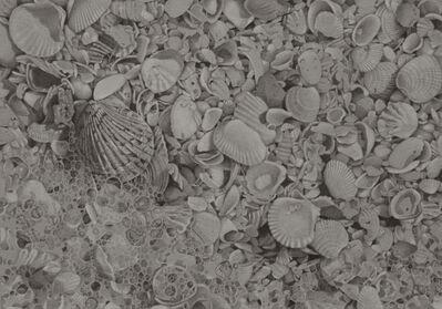 Mary Reilly, 'Seashells 4', 2019