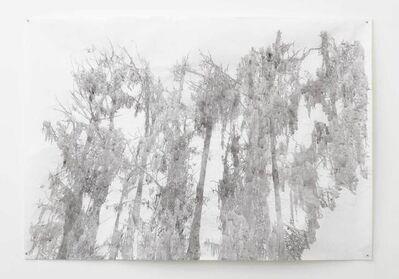 Anne Allen, 'Big Cypress I, Caddo', 2013