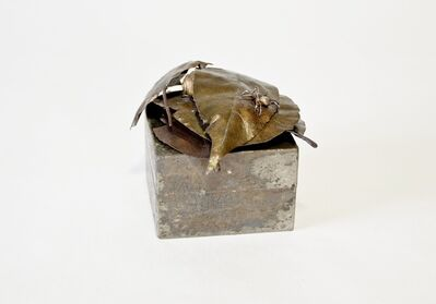 Takeshi Harada, 'Fall -withered leaf and spider box-', 2019