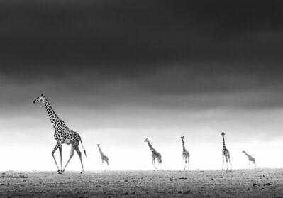 David Yarrow, 'High, Amboseli, Kenya', 2013