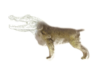 Miguel Ángel Fúnez, 'Gene targeting_Dog', 2013