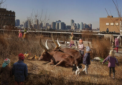 Marcelo Tinoco, 'High Line 2 (from the series Histórias Naturais)', 2012